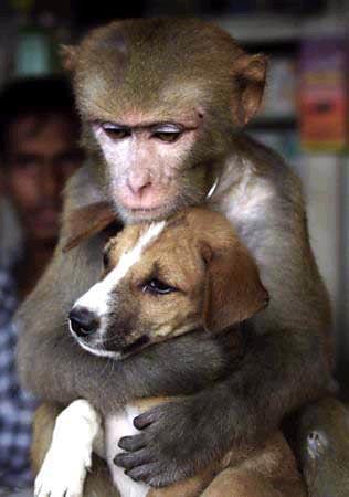 monkey_dog.jpg